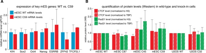 Tagging CTCF and Rad21 does not affect expression of key pluripotency genes or CTCF and Rad21 protein levels. ( A ) Expression of key mouse embryonic stem cell genes measured by qPCR was similar in wild-type (blue) and C59 (FLAG-Halo-mCTCF; mRad21-SNAP f -V5) (red) JM8.N4 mouse embryonic stem cells. ( B ) CTCF (red) and Rad21 (green) protein levels as measured by western blot and normalized to either H3 levels (solid bar) or TBP (hashed bar) was similar between wild-type and tagged mouse embryonic stem cells (WT, C87, C45, C59) and similar between wild-type and tagged human U2OS cells (WT, C32). Error bars show standard deviation among three replicates. DOI: http://dx.doi.org/10.7554/eLife.25776.006