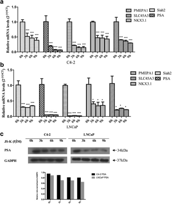 C4-2 ( a ) and LNCaP ( b ) cells were incubated for three periods (3, 6 and 9 h) with 5 μM JS-K. RT-PCR was performed to access the influence of JS-K on transcription of specific AR target genes ( PSA , NKX3.1 , PMEPA1 and SLC45A3 ). Each assay was performed in triplicate and the expression levels of mRNAs were expressed as 2 -ΔΔCT ; c western blotting was performed to detect the influence of JS-K on PSA in C4-2 and LNCaP cells incubated for three periods (3, 6 and 9 h) with 5 μM JS-K. Results are mean ± SD of three different experiments. Single asterisks (*) indicate a significant difference ( P
