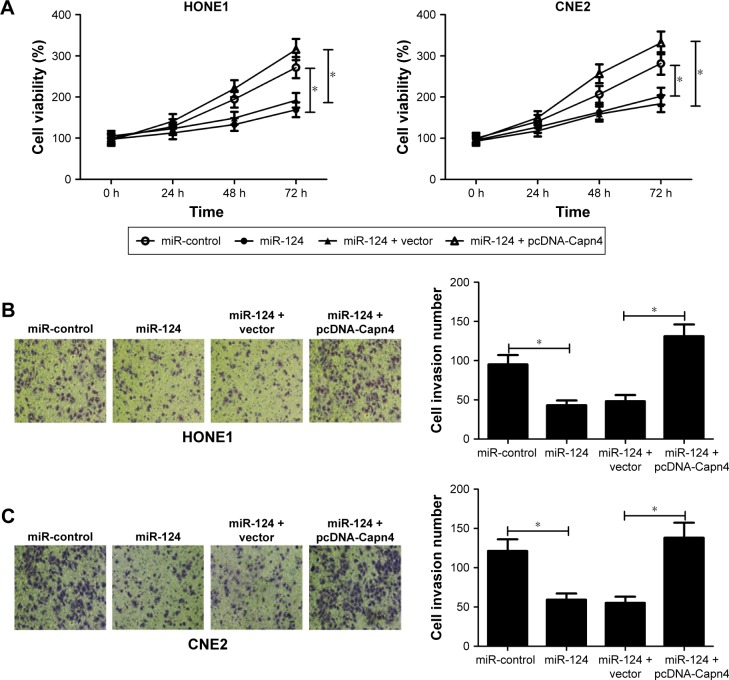 MicroRNA-124 (miR-124) suppressed proliferation and invasion of NPC cells through the inhibition of Capn4 expression. HONE1 and CNE2 cells were transfected with miR-124 or in combination with pcDNA-Capn4. Notes: ( A ) MTT assay confirmed that restored Capn4 expression reversed the inhibitory effect of miR-124 on the cell viability of HONE1 and CNE2 cells at 24, 48, and 72 h after transfection. Data are shown as mean ± standard error of mean (n=3) ( B and C ) Transwell invasion assay suggested that transfection of pcDNA-Capn4 abolished miR-124-mediated inhibition of cell invasion in HONE1 and CNE2 cells. Data are shown as mean ± standard deviation (n=3). * P