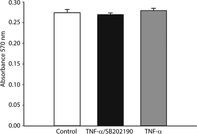 The cell cytotoxicity of TNF-α and the effect of p38 inhibitor SB202190 on the viability of DH neuron were evaluated using MTT assay. Notes: MTT assay that SB202190 in combination with TNF-α exerted no effect on the viability of DH neurons. Abbreviations: DH, dorsal horn; TNF-α, tumor necrosis factor-alpha.