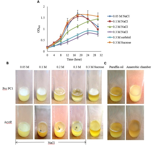Impacts of osmotic stress on growth and AL biofilm formation in SOBG broth at 27°C. (A) Growth of wild type in SOBG containing indicated concentrations of NaCl. (B) AL biofilm formation by the wild type (Pcc PC1) and the Δ cytR mutant in different concentrations of NaCl. (C) No biofilm formed by the wild type and the Δ cytR mutant in anaerobic condition. These experiments were repeated at least three times. The values are mean and error bars indicate standard deviations ( ± ) of three independent experiments.