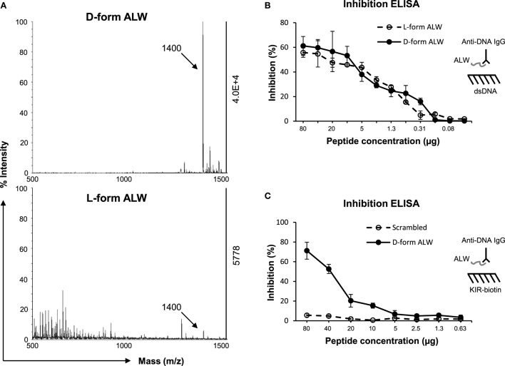 The effect of d -form ALW peptide on anti-dsDNA IgG binding to double-stranded DNA (dsDNA) antigen or kinase inhibitory region (KIR) peptide . (A) The catalytic effect of anti-dsDNA IgG on d -form or l -form ALW peptide was detected by matrix-assisted laser desorption/ionization-time of flight mass spectrometry. (B) Inhibition enzyme-linked immunosorbent assay (ELISA) was performed for the binding of anti-dsDNA IgG to dsDNA antigen upon the addition of ALW peptides. (C) Similarly, inhibition ELISA was performed for the binding of anti-dsDNA IgG to suppressor of cytokine signaling 1 (SOCS1)-KIR peptide upon the addition of d -form or scrambled ALW peptide. Data were from three independent experiments. Data points and error bars represent mean ± SEM. Representative graphs are shown.