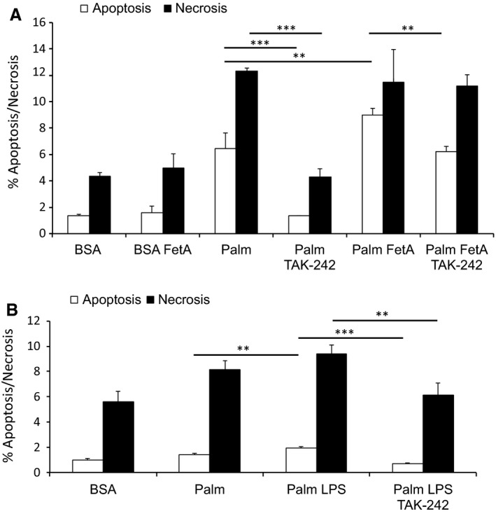 TLR 4 blockage attenuates bovine FetA or LPS exacerbated palmitic acid‐induced podocyte death. (A) Graph shows podocytes treated with 200 μ mol/L palmitic acid (palm) or bovine serum albumin ( BSA ) (control) alone or in combination with 200 μ g/mL bovine FetA for 48 h and preincubated with 1 ng/mL TAK ‐242 for 1 h. Bar graph represents the mean percentages ± SD of Annexin V‐positive/ PI ‐negative (early apoptotic) and Annexin V‐positive/ PI ‐positive (late apoptotic/necrotic) podocytes ( n = 3, ** P