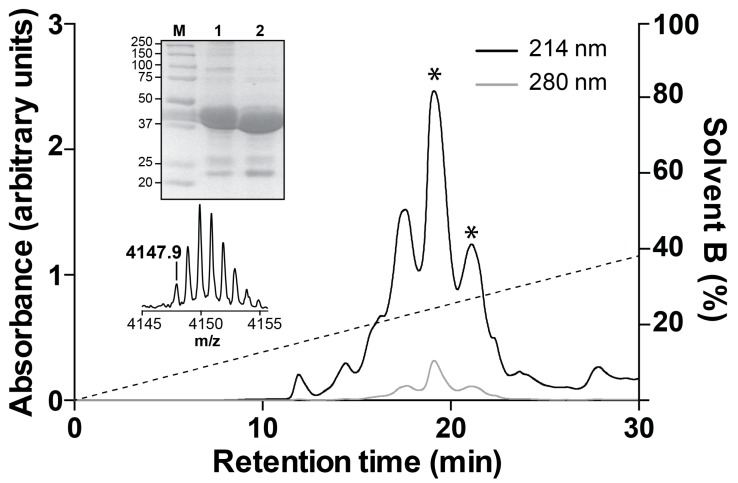 Recombinant production of <t>Mb1a.</t> Semi-preparative <t>RP-HPLC</t> chromatogram of recombinant Mb1a released by TEV protease cleavage of the MBP-Mb1a fusion protein (see Materials and Methods for more details). The dotted line indicates the gradient of solvent B (90% acetonitrile/0.043% TFA). Top inset: SDS-PAGE gel showing pre-cleaved MBP-Mb1a fusion protein (lane 1) and remaining MBP after cleavage (lane 2). Lane M contains molecular markers (masses in kDa). Bottom inset: MALDI-TOF mass spectrum of pure recombinant Mb1a.