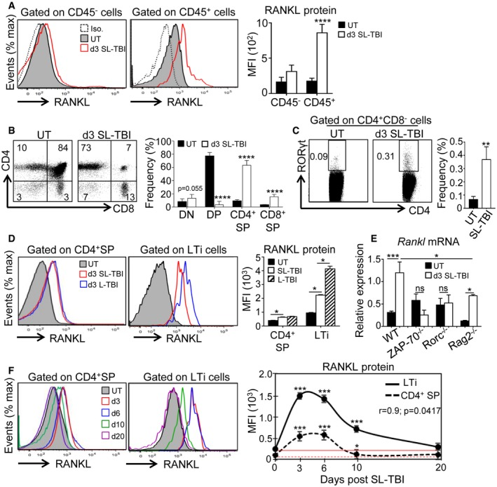 RANKL is upregulated in CD 4 + SP and LT i cells during the course of thymic regeneration Expression of RANKL protein analyzed by flow cytometry in CD45 − and CD45 + thymic cells from untreated (UT) WT mice or at d3 SL‐TBI. Flow cytometry profiles and frequencies of DN (double negative), DP (double positive), CD4 + and CD8 + SP (single positive) (B), and LTi cells (C) from untreated (UT) WT mice or at d3 SL‐TBI. Expression level of RANKL protein in CD4 + SP and LTi cells from UT WT mice or at d3 SL‐TBI and L‐TBI. Expression of Rankl mRNA in the total thymus isolated from UT WT, Rorc −/− , ZAP‐70 −/− , and Rag2 −/− mice or at d3 SL‐TBI ( n = 3–6 mice per genotype). CD4 + SP and LTi cells from UT WT mice or at d3, d6, d10, and d20 SL‐TBI with no hematopoietic rescue were analyzed for the expression of RANKL protein. Mean fluorescence intensity (MFI) of RANKL in CD4 + SP and LTi cells over time following SL‐TBI. The red lines represent the MFI of RANKL at baseline. Data information: Data are shown as mean ± SEM and are pooled of four independent experiments with similar results ( n = 3–4 mice per group). * P