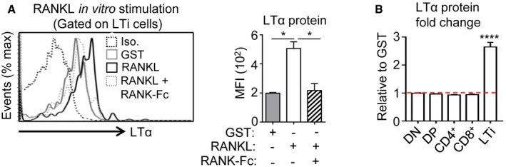 In vitro stimulation with RANKL induces the upregulation of LTα specifically in thymic LTi cells LTα protein expression was analyzed by flow cytometry in thymic LTi cells from sublethally irradiated WT mice treated in vitro for 24 h with GST, RANKL‐GST, or RANKL‐GST + RANK‐Fc. The histogram shows the MFI of LTα for each condition. Iso: Isotype control. LTα protein was analyzed in DN, DP, CD4 + , and CD8 + SP as well as in LTi cells purified from sublethally irradiated WT mice and treated in vitro for 24 h with GST or RANKL‐GST. Results are represented as fold change relative to the GST condition. Data information: Data are shown as mean ± SEM and are pooled of two independent experiments with similar results ( n = 3 mice per group). * P