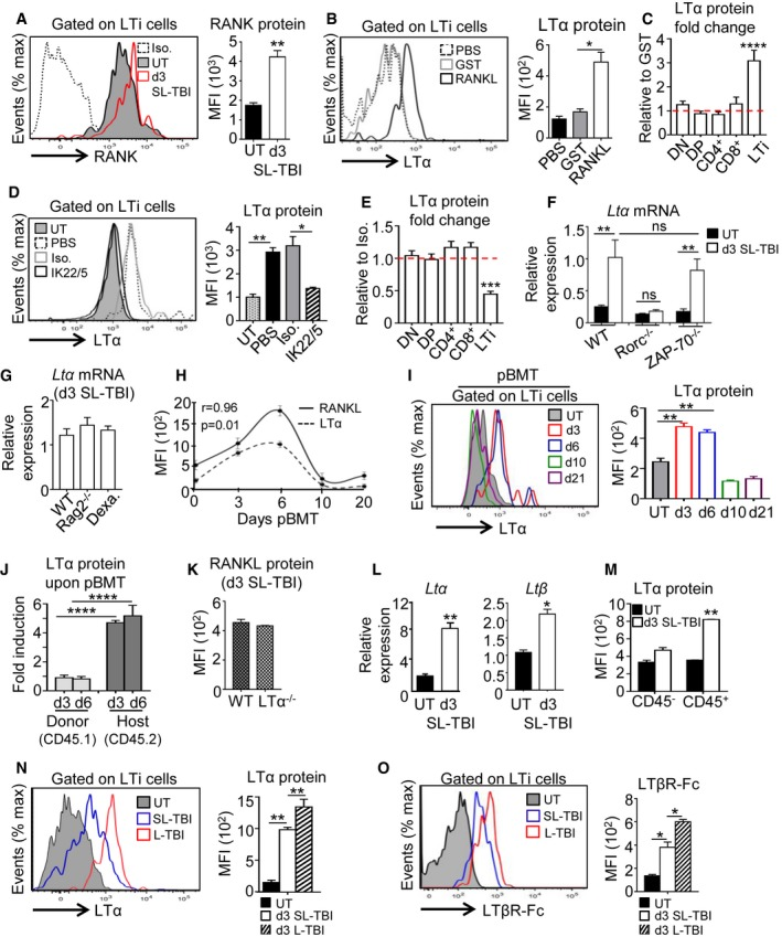 RANKL administration induces LT α upregulation specifically in thymic LT i cells after TBI Expression of RANK receptor in thymic LTi cells from UT WT ( n = 6) mice and at d3 SL‐TBI ( n = 6). Expression level of LTα protein in thymic LTi cells from WT mice treated in vivo with PBS ( n = 6), GST ( n = 6), or RANKL‐GST ( n = 6) during 3 days after SL‐TBI. LTα protein was analyzed in thymocyte subsets and LTi cells from WT mice treated in vivo with GST ( n = 9) or RANKL‐GST ( n = 9) during 3 days after SL‐TBI. Results are represented as fold change relative to the GST condition. Data are pooled of three experiments. Expression level of LTα protein in thymic LTi cells from WT mice treated in vivo with PBS ( n = 6), an isotype control (Iso.) ( n = 3), or a neutralizing anti‐RANKL antibody (IL22/5) ( n = 6) during 3 days after SL‐TBI. LTα protein was analyzed in thymocyte subsets and LTi cells from WT mice treated in vivo with an isotype control ( n = 3), or a neutralizing anti‐RANKL antibody ( n = 6) during 3 days after SL‐TBI. Results are represented as fold change relative to the isotype condition. Expression of Ltα mRNA in the total thymus isolated from UT WT, Rorc −/− , and ZAP‐70 −/− mice or at d3 SL‐TBI ( n = 3–6 mice per genotype). Expression of Ltα mRNA in the total thymus isolated from irradiated: WT, Rag2 −/− mice, and WT mice treated 3 days before with dexamethasone (Dexa). Data are pooled of two to three experiments ( n = 6–12 mice per group). Correlation of RANKL and LTα expression in thymic LTi cells during the course of BMT. pBMT: post‐bone marrow transplantation. Data are pooled of three independent experiments with similar results ( n = 3–4 mice per group). Expression level of LTα protein in thymic LTi cells from UT WT mice or at d3, d6, d10, and d21 after BMT. Data are pooled of three independent experiments with similar results ( n = 3–4 mice per group). Expression level of LTα protein analyzed by flow cytometry in thymic LTi cells from CD45.1 donor and