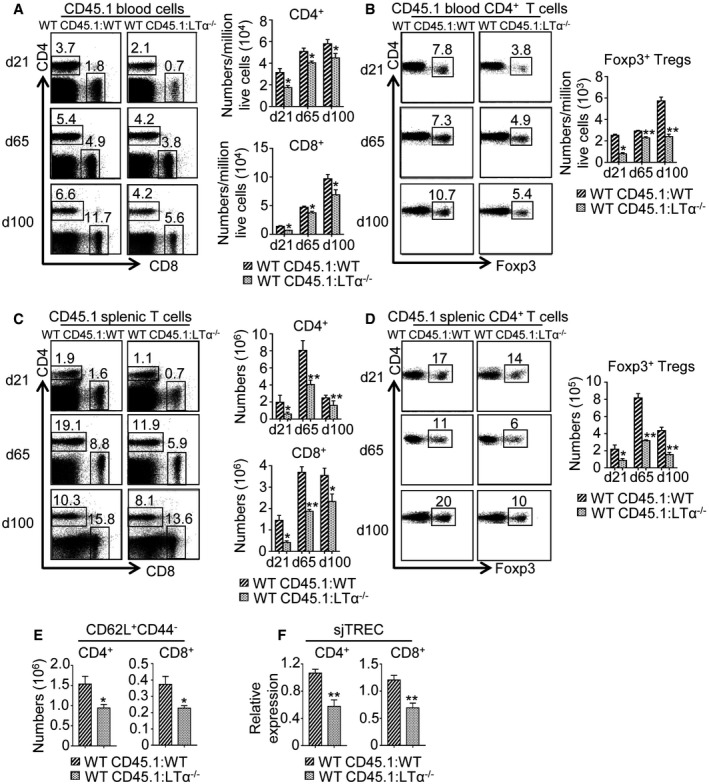 LTα expression during BMT is required for peripheral T‐cell reconstitution Flow <t>cytometry</t> profiles and numbers of CD4 + and CD8 + T cells (A, C) as well as CD4 + Foxp3 + Tregs (B, D) from CD45.1 donor origin in blood (A, B) and spleen (C, D) of WT CD45.1:WT and WT CD45.1:LTα −/− mice at d21, d65, and d100 upon BMT. Significance relative to WT CD45.1:WT chimeras. Histograms show numbers of CD62L + CD44 − naïve CD4 + and CD8 + T cells in the spleen of WT CD45.1:WT and WT CD45.1:LTα −/− mice at d21 pBMT. sjTREC were quantified by qPCR from genomic DNA of cell‐sorted splenic CD4 + and CD8 + T cells from WT CD45.1:WT and WT CD45.1:LTα −/− mice at d21 pBMT. Data information: Data are shown as mean ± SEM and are pooled of two independent experiments with similar results ( n = 3–5 mice per group). * P