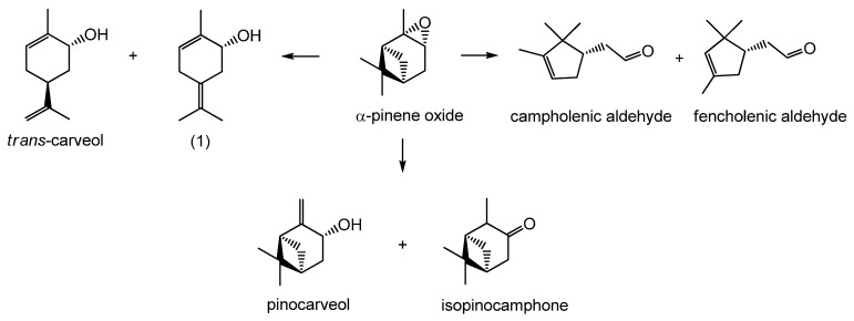 Reaction schemes of α-pinene oxide isomerization to trans -carveol, (1) 2-methyl-5-(propan-2-ylidene)cyclohex-2-enol, campholenic aldehyde, fencholenic aldehyde, pinocarveol and isopinocamphone.