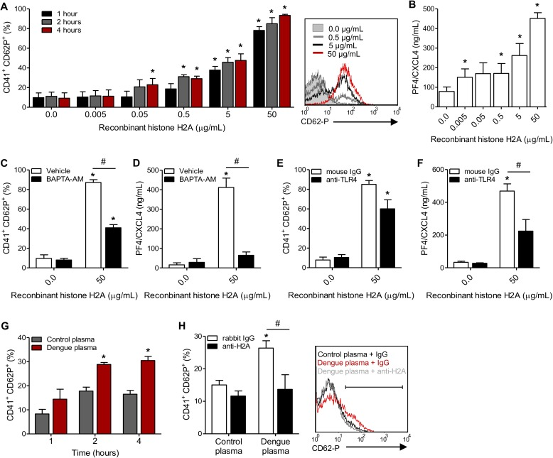 Circulating histone H2A in plasma from dengue-infected patients activates platelets. ( A-B ) Platelets isolated from healthy volunteers were stimulated with recombinant human histone H2A at the indicated concentrations. ( A ) Platelet surface P-selectin (CD62-P) was evaluated 1, 2 and 4 hours post stimulation by flow cytometry and ( B ) PF4/CXCL4 concentration was measured in supernatants 4 hours post stimulation. ( C-F ) Surface P-selectin and PF4/CXCL4 concentration in the supernatants of platelets stimulated with recombinant histone H2A for 2 hour in the presence of ( C-D ) the calcium chelator BAPTA-AM (20 μM) or vehicle (DMSO); or ( E-F ) blocking antibody against TLR4 (20 μg/mL) or isotype matched IgG. ( G-H ) P-selectin expression on platelets exposed to ( G ) plasma from six dengue-infected patients (dengue plasma) or four heterologous healthy volunteers (control plasma) for the indicated time-points; and ( H ) platelets exposed to dengue plasma or control plasma for 4 hours in the presence of anti-histone H2A (20 μg/mL) or isotype matched IgG. Bars represent mean ± standard error of the mean of 3 independent experiments ( A-F ) and of 4 to 6 independent plasma donors ( G-H ). * indicates p