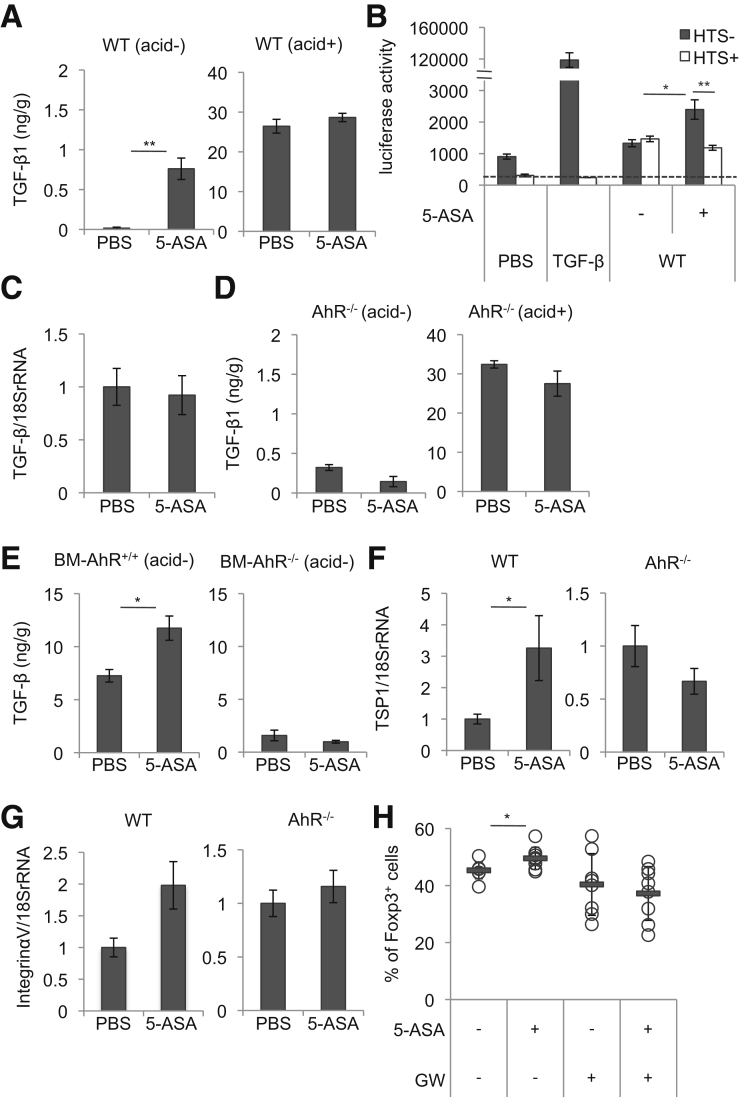 Mesalamine increases the level of the active form of TGF-β1, which is necessary for Treg induction. ( A ) Levels of the active form of TGF-β1 (acid-) or total TGF-β1 (acid+) in colons isolated from WT mice orally treated with mesalamine for 2 weeks (n = 5 mice per group). ( B ) Colon tissue samples (1.6 mg) from WT mice orally treated with mesalamine for 2 weeks were added into the culture of TGF-β reporter cells (MFB-F11) for 24 hours with or without HTS466284 (a chemical inhibitor of TGF-β signaling); then, SEAP activities of the supernatants were measured. 10 ng/mL human TGF-β1 was used as a positive control (n = 5). ( C ) TGF-β1 mRNA levels in the colon isolated from WT mice orally treated with mesalamine for 2 weeks (n = 8 mice per group). ( D ) Levels of active TGF-β1 (acid-) or of total TGF-β1 (acid+) in the colon isolated from AhR -/- mice treated orally with mesalamine for 2 weeks (n = 4 mice per group). ( E ) Levels of active TGF-β1 (acid-) or of total TGF-β1 (acid+) in the colon isolated from bone marrow chimeric mice (BM-AhR +/+ mice and BM-AhR -/- mice) treated orally with mesalamine for 2 weeks (n = 5 mice per group). ( F , G ) TSP-1 and Integrin αV mRNA levels in the colon isolated from WT mice or AhR -/- mice orally treated with mesalamine for 2 weeks (n = 8 mice per group). ( H ) WT mice were orally treated with mesalamine with or without GW788388, an inhibitor of TGF-β type I receptor kinase, in drinking water for 2 weeks, and the percentages of Foxp3 + cells within the CD3 + CD4 + cell population isolated from the colon LP were determined (n = 8 mice per group). Error bars represent mean ± SEM. * P