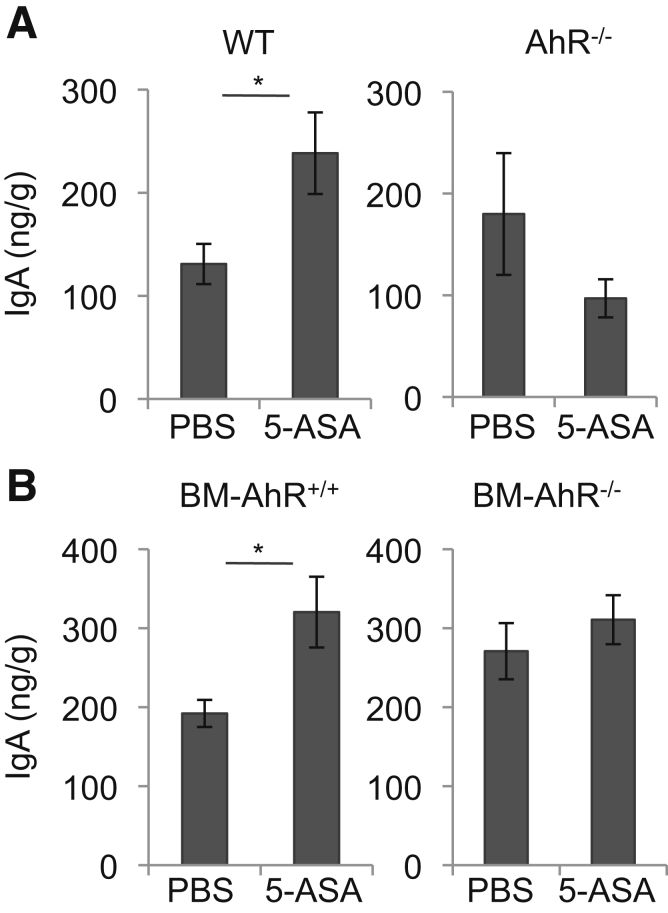 Mesalamine increases fecal IgA production. ( A ) WT (n = 6 mice per group) and AhR -/- mice (n = 4 mice per group), or ( B ) bone marrow chimeric mice (BM-AhR +/+ mice and BM-AhR -/- mice) (n = 10 mice per group) were orally treated with 50 mg/kg of mesalamine for 2 weeks. Concentrations of IgA of stool samples were measured by ELISA. Error bars represent mean ± SEM. * P