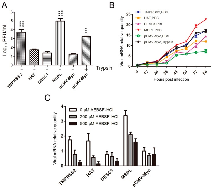 Effects of TTSPs and TTSP inhibitor on viral replication. ( A ) Porcine epidemic diarrhea virus (PEDV) titers following the expression of TTSPs in Vero cells. Viral titers were determined by plaque assay. *** p