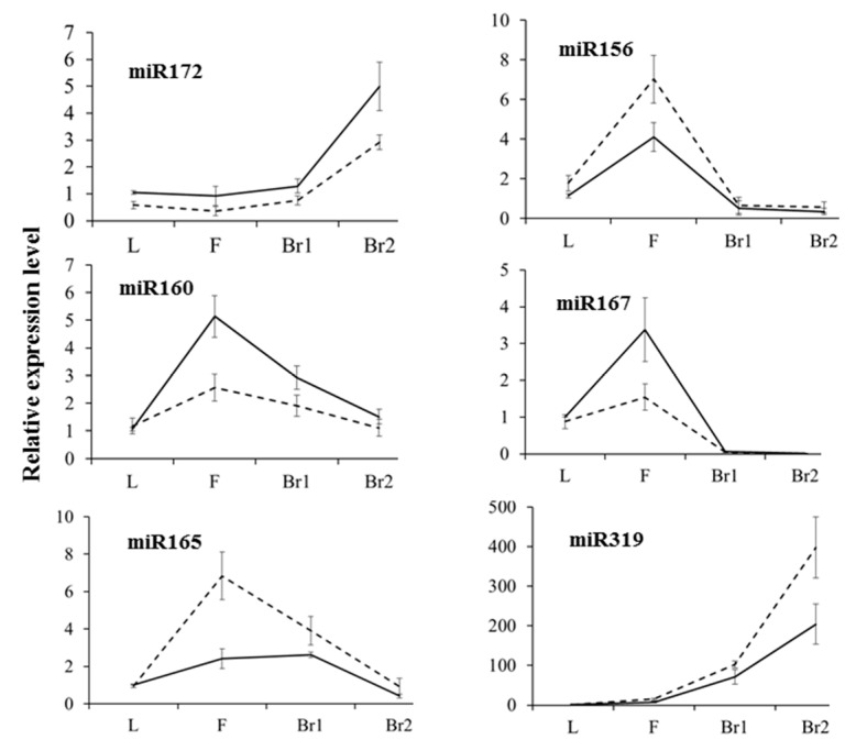 Validation of selected differentially expressed miRNAs by qRT-PCR in the leaf (L), flower bud (F), branching site at bolting (Br1), and branching site at early flowering (Br2) in 6098B (solid line) and Purler (dotted line), performed on the same tissue samples used for verifying gene expression. Data represent means (three biological replicates) ± standard deviation.