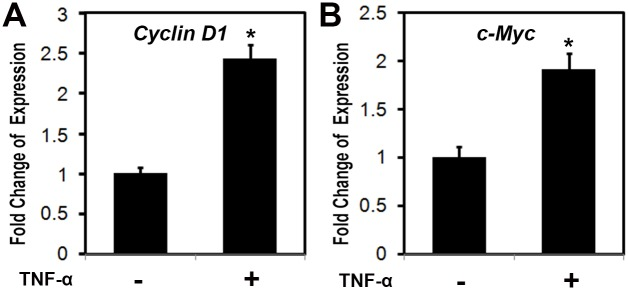 TNF-α activated the expressions of cyclin D1 and c-Myc. Primary ligamentum flavum cells derived from TOLF patients were cultured and treated with TNF-α (100 ng/ml) for 24 hr. Total RNA was isolated and measured by real time RT-PCR. The RNA level from the control group was normalized to a value of 1. Values were presented as the mean ±S.D. A paired t -test was performed comparing control and TNF-α group. *: A star indicates statistical significance compared to control group with p