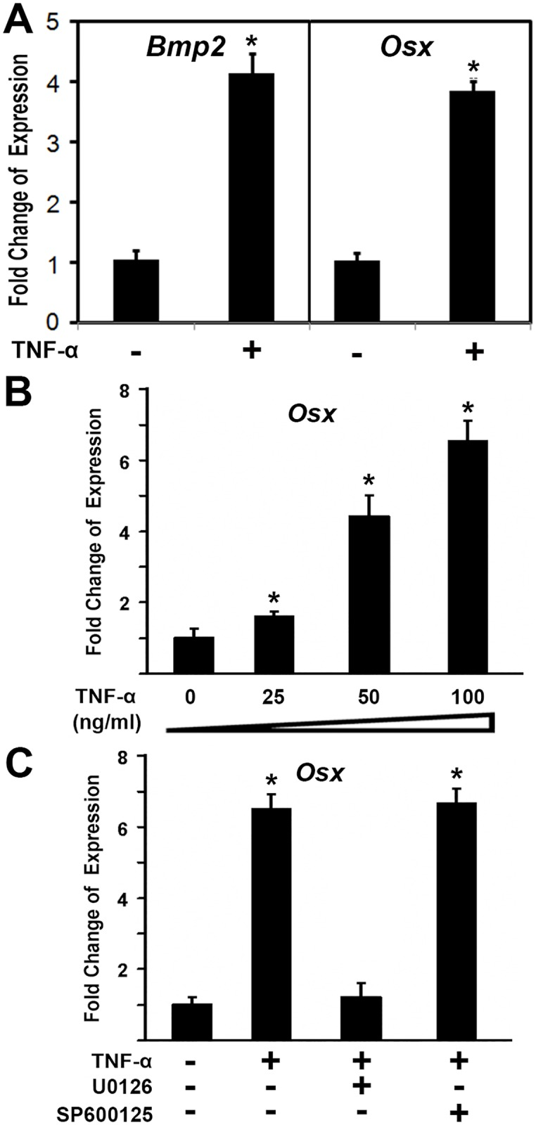 TNF-α induced the expression of osteoblast genes in primary cells from TOLF. Primary ligamentum flavum cells were derived from TOLF patients. Primary cells were treated with 100 ng/ml TNF-α or as indicated for 24 hr. Total RNA was isolated and measured by real time RT-PCR. The RNA level from the control group was normalized to a value of 1. Values were presented as the mean ±S.D. A paired t -test was performed comparing control and TNF-α group. *: A star indicates statistical significance compared to control group with p