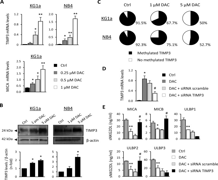 TIMP3 is involved in the release of sMICA, sMICB and sULBP2 in AML cell lines ( A ) KG1a and NB4 cells were treated with DMSO (Ctrl) or DAC (0.25, 0.5 and 1 μM) for 48 hours, and TIMP3 expression was analyzed by <t>qRT-PCR.</t> Each bar represents the relative expression of TIMP3 normalized with respect to the reference gene (GAPDH), using the 2 −ΔCt method. MICA transcription levels in the KG1a cell line untreated (DMSO, Ctrl) or treated with DAC at different concentrations were used as a positive control. Results are summarized as the mean ± SEM of five independent experiments. * p
