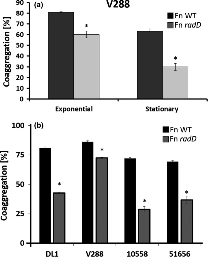 Quantitative coaggregation of (a) wild‐type ( WT ) Streptococcus gordonii strain V288 and the WT Fusobacterium nucleatum strain ATCC 23726, or the radD mutant derivative, at different phases of growth. (b) Quantitative coaggregation of WT S. gordonii strains ( DL 1, V288, ATCC 10558, and ATCC 51656) with WT F. nucleatum strain ATCC 23726, or the radD mutant derivative at exponential growth. Data represent means and standard deviation of percent coaggregation of at least three independent experiments. * p