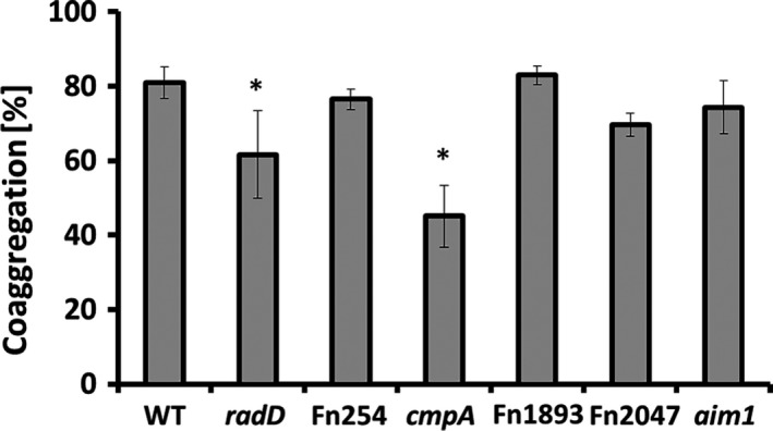 Quantitative coaggregation of wild‐type ( WT ) Streptococcus gordonii strain V288 with Fusobacterium nucleatum ATCC 23726 WT strain and OMP mutant derivatives ( radD , Fn254, cmpA , Fn1893, Fn2047, and aim1 ). Data represent means and standard deviation of percent coaggregation of at least three independent experiments. * p