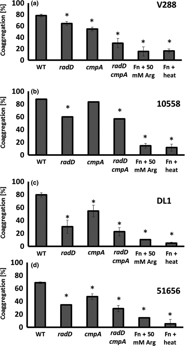 Quantitative coaggregation of wild‐type Streptococcus gordonii strain (a) V288, (b) ATCC 10558, (c) DL 1, and (d) ATCC 51656 with Fusobacterium nucleatum strains: Wild‐type ( WT ) and the mutant derivatives: radD , cmpA , and radD cmpA double mutant. Data represent means and standard deviation of percent coaggregation of at least three independent experiments. * p