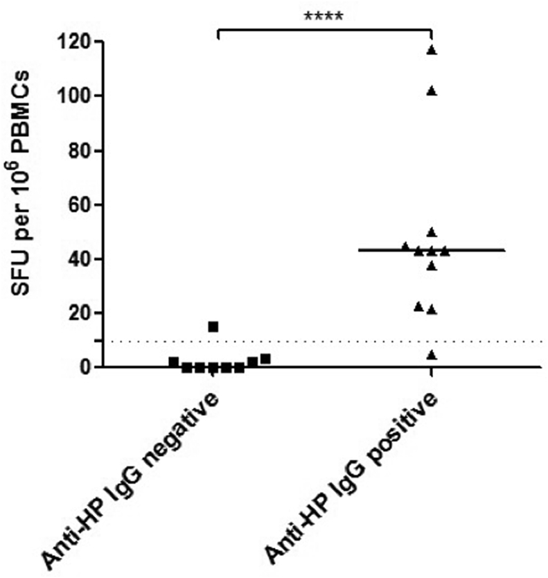 IFN-γ T cell response to H. pylori lysate in individuals with positive and negative anti - H. pylori IgG serology. Patients and disease controls were grouped and divided into those with positive and negative anti - H. pylori IgG serology. The dashed line represents the cut-off for a positive response: > 10 spot-forming units (SFU) per 10 6 PBMCs. Median values are given for both groups. Mann-Whitney p value; ****p