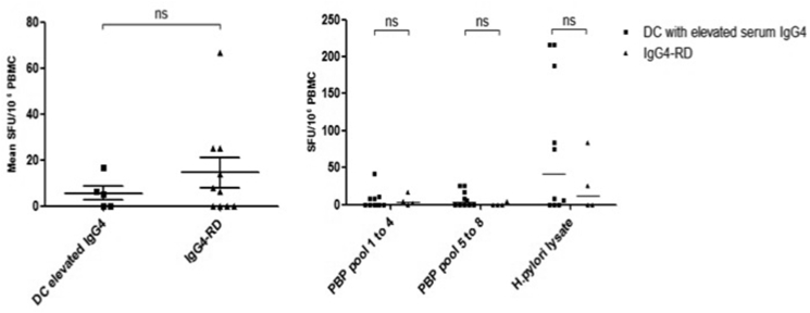 Total <t>IgG</t> responses in <t>IgG4-RD</t> patients and disease controls. A (Left ): Total IgG response in IgG4-RD patients and disease controls with elevated serum IgG4. Errors bars show the SEM. Mann-Whitney p values; ns p ≥ 0.05. B (Right) : IgG response to PBP peptide pools 1–4 and 5–8, and H. pylori whole lysate in IgG4-RD patients and disease controls with an elevated serum IgG4. Errors bars show the median. SFU: spot-forming units (per 10 6 PBMCs).