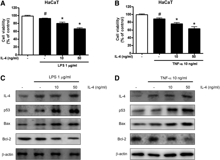 Apoptotic effect of IL-4 on LPS- or TNF-α–induced cell viability and apoptotic protein expression in human keratinocytes. IL-4–treated human keratinocytes were treated with LPS (1 μg/ml) or TNF-α (10 ng/ml). After treatment, cell viability was measured by the MTT assay (A and B), and the expression of apoptosis regulatory proteins (C and D) was determined. β-Actin was used as an internal control. Each blot is representative of three experiments. # ( P