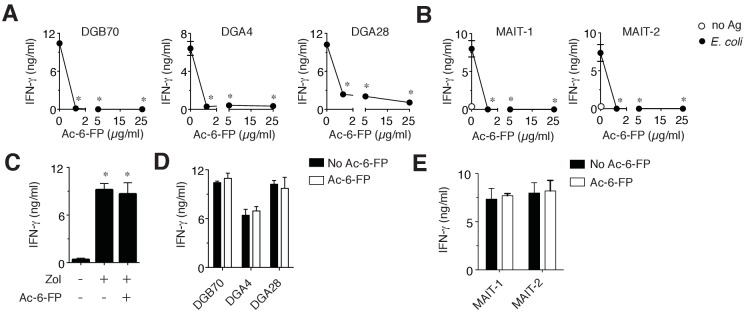 MR1T cell clones do not recognize Ac-6-FP. ( A ) Stimulation of three representative MR1T cell clones by A375-MR1 cells in the absence or presence of acetyl-6-formyl pterin (Ac-6-FP). ( B ) Stimulation of two MAIT cell clones (MRC25 and SMC3) by A375-MR1 cells pulsed with E. coli lysate in the absence or presence of Ac-6-FP. ( C ) A375-MR1 cells were treated with zoledronate (Zol) in the absence or presence of Ac-6-FP (25 µg/ml) and used to stimulate a TCR Vγ9-Vδ2 cell clone (G2B9). ( D ) A375 cells expressing K43A mutant MR1 molecules (A375-MR1 K43A) were used to stimulate the three MR1T cell clones shown in A, in the absence or presence of Ac-6-FP (25 µg/ml). ( E ) Stimulation of the two MAIT cell clones used in B by A375-MR1 K43A cells pulsed with E. coli lysate in the absence or presence of Ac-6-FP (25 µg/ml). Results are expressed as mean ± SD of IFN-γ release assessed in duplicate cultures and are representative of three independent experiments. *p