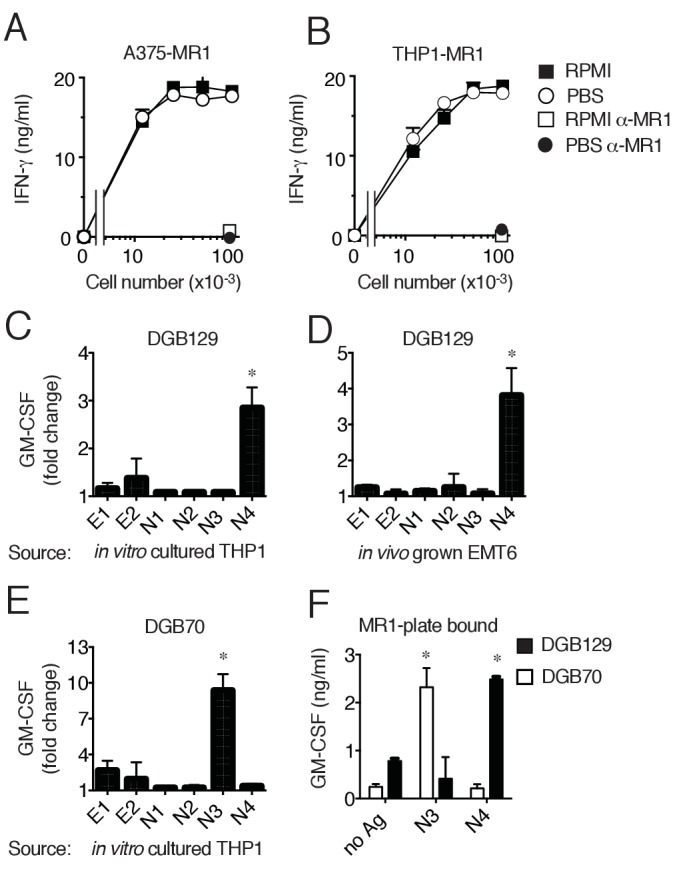 MR1T cells recognize diverse antigens not derived from RPMI 1640 medium. Stimulation of the DGB129 MR1T cell clone by MR1-overexpressing ( A ) A375 cells (A375-MR1) and ( B ) THP-1 cells (THP1-MR1) grown for 4 days in RPMI 1640 or in PBS both supplemented with 5% human serum. Inhibition of T cell clone reactivity by anti-MR1 blocking mAbs (α-MR1) is shown. DGB129 cells recognize APCs loaded with fractions isolated from ( C ) THP-1 cell lysate or from ( D ) in vivo grown mouse breast tumor EMT6. Fractions E1 and E2 contain hydrophobic molecules; fractions N1-N4 contain hydrophilic molecules. ( E ) DGB70 MR1T cells react to N3 fraction of THP-1 lysate. ( F ) Stimulation of DGB129 and DGB70 T cells by THP-1-derived fractions N3 and N4 loaded onto plastic-bound recombinant MR1. Shown is T cell release of IFN-γ or GM-CSF mean ± SD of duplicate cultures (representative of three independent experiments). Total cytokine release is shown in panels A, B, F; fold increase over background is shown in panels C, D, E. *p