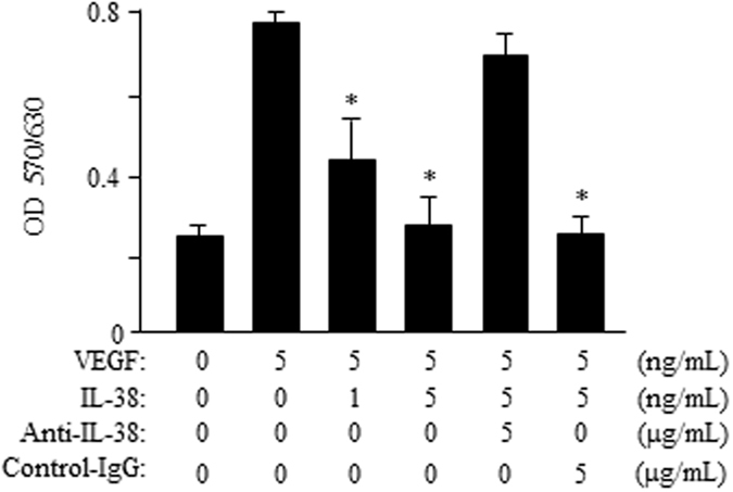 IL-38 attenuates endothelial cell proliferation. HRECs (1 × 10 4 ) were cultured with VEGF/IL-38/anti-IL-38/IgG at 37 °C in a CO 2 incubator and the proliferation was determined by MTT method. Shown are results from one representative experiment of three performed (in triplicates). * P