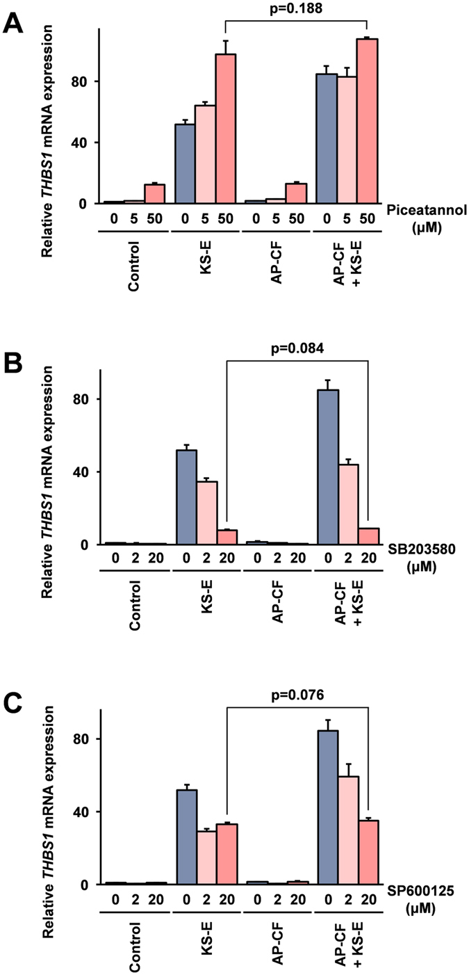 The Syk and its downstream kinases are involved in the enhancement of the THBS1 induction after stimulation with KS-E. Mono Mac 6 cells were treated for 1 hour with piceatannol ( A ), SB203580 ( B ), or SP600125 ( C ) at the concentrations indicated in the figure. Subsequently, the cells were stimulated with a 20-fold dilution of KS-E and AP-CF containing 100 μg/ml of β-glucan. After an additional 2-hour incubation period the cells were harvested, and the expressions of THBS1 mRNA in the cells were monitored using the real time RT-PCR method. The data are represented as relative values compared with the mRNA expression in the control cells after normalization with GAPDH mRNA expression. Error bars indicate standard deviations calculated by three independent experiments.