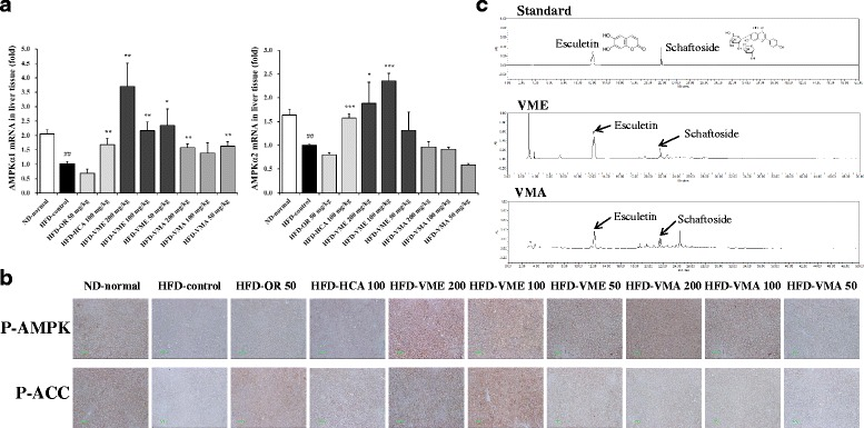 Effects of VME and VMA on hepatic AMPK expression and HPLC chromatogram. a AMPKα1 and AMPKα2 mRNA expression and b AMPK and ACC phosphorylation. c HPLC-PDA chromatograms of two standards mixture, VME, and VMA at 330 nm. Esculetin and schaftoside appeared at retention times of approximately 12.3 and 21.7 min, respectively. Data are presented as mean ± SEM ( n = 4); # p
