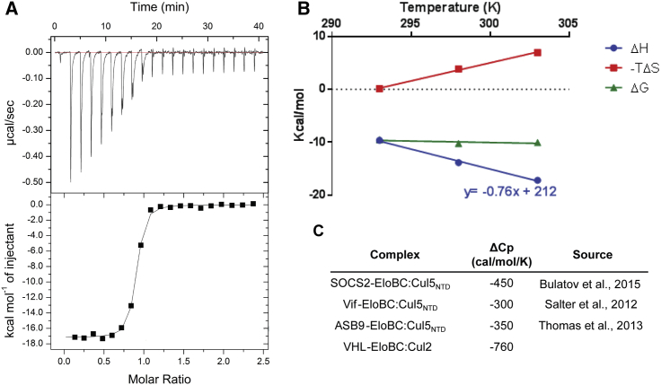 Biophysical Characterization of the Interaction between VBC and Cul2 (A) ITC data whereby VBC (200 μM) was titrated into Rbx1-Cul2 (20 μM) at 303 K. Under these conditions, the binding affinity of the interaction ( K D ) is 42 nM. (B) Temperature dependency of the thermodynamic parameters Δ H , Δ G and −TΔ S . The change in heating capacity, Δ C p , was derived from the change in enthalpy with the temperature. (C) Comparison of Δ C p values for similar CRL systems.