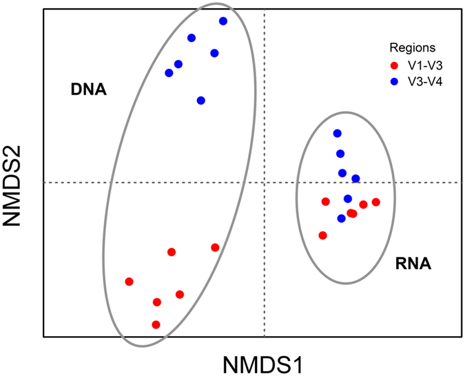 Non-metric multidimensional scaling plot (Bray-Curtis dissimilarity analysis) of the complete dataset (at genus level) including the six time points of sampling over a 24-h period, the different 16S rRNA regions analyzed and templates used (DNA versus RNA). Blue represents V3-V4 derived sequences and red represents V1-V3 derived sequences.