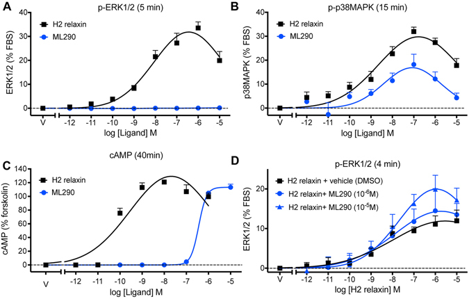 Activation of ERK1/2, p38MAPK and generation of cAMP by H2 relaxin and ML290. In HEK-RXFP1 cells, H2 relaxin activated p-ERK1/2 ( A ) 5 min), p-p38MAPK ( B ) 15 min) and cAMP accumulation ( C ) 30 min) in a concentration-dependent manner. ML290 did not directly activate p-ERK1/2 ( A ), but did activate p38MAPK ( B ) with lower efficacy and cAMP accumulation with similar efficacy but significantly lower potency than H2 relaxin ( C ). 10 min pretreatment with ML290 enhanced p-ERK1/2 activation produced by relaxin ( D ) 4 min). Data are mean ± SEM for 4–8 independent experiments.