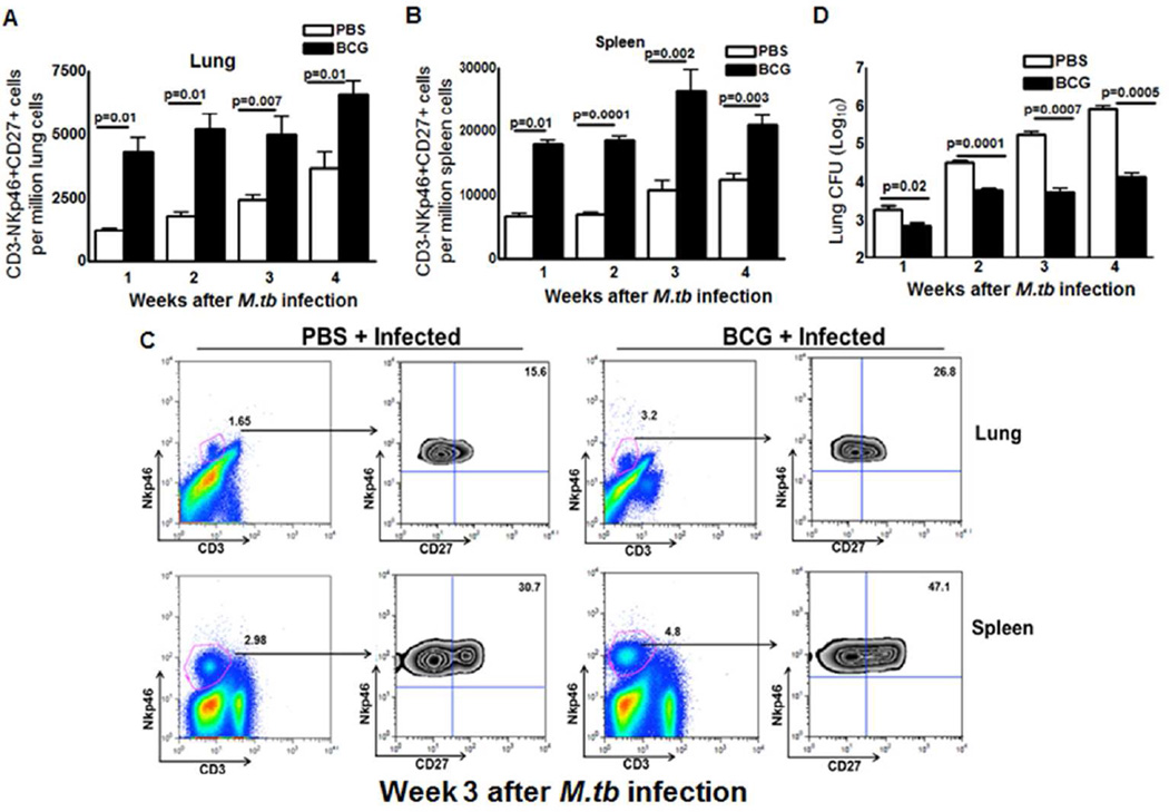Memory-like NK cells expand after BCG vaccination and challenge with M. tb H37Rv C57BL/6 mice (20 mice per group) were given 100 µl of PBS or immunized subcutaneously with 10 6 CFU of BCG in 100 µl of PBS. After thirty days, mice were challenged with 75–100 CFU of M. tb H37Rv by aerosol. At weekly intervals up to 4 weeks, five mice in each group were sacrificed, and the lung bacterial burden and percentages of CD3-NKp46+ cells in lungs and spleen that were CD27+ were determined. (A) CD3-NKp46+CD27+ cells in lungs. (B) CD3-NKp46+CD27+ cells in spleens. (C) A representative flow cytometry plot is shown. Gating strategy to identify NK cells was similar to Figure 1 . (D) Bacterial burden in lungs. Mean values and SEs are shown. Data are representative of two independent experiments.
