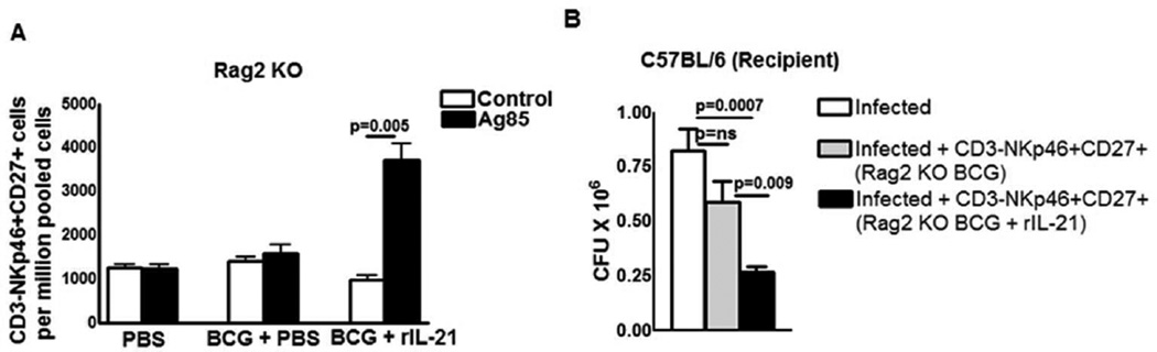 IL-21 is required at the time of BCG vaccination for the generation of memory-like NK cells C57BL/6 (Rag2 knockout) mice were treated with PBS or immunized subcutaneously with 10 6 CFU of BCG in 100 µl of PBS. Some of the BCG vaccinated mice received 0.3 mg of recombinant IL-21 or PBS through tail vein at the time of BCG vaccination. One month after vaccination, spleen, and peripheral lymph node cells were pooled. (A) Spleen, and peripheral lymph node cells from the above groups of mice were cultured in the presence or absence of Ag85. After 5 days, expansion of CD3-NKp46+CD27+ cells was determined by flow cytometry. (B) Rag2 Knockout mice (5 mice per group) were immunized subcutaneously with 10 6 CFU of BCG and treated with or without recombinant IL-21. After one month, CD3-NKp46+CD27+ NK cells from pooled spleens and peripheral lymph node cells were isolated and adoptively transferred (1 × 10 6 cells once on day 0 of infection) to M. tb H37Rv-infected C57BL/6 mice. Infected mice were sacrificed thirty days post-infection, lung bacterial burden was measured. Mean values and SEs are shown. Data are representative of three independent experiments.