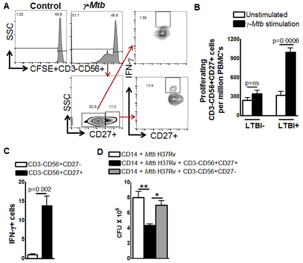 Expansion of memory-like NK cells in individuals with LTBI PBMC from 5 individuals with LTBI and 5 individuals without LTBI were labeled with CFSE and cultured, with or without γ- M. tb . After 5 days, proliferating CD3-CD56+CD27+ cells were measured by flow cytometry. (A) A representative flow cytometry plot is shown. NK cells were identified by sequentially gating on lymphocytic singlet population and then on CD3−CD56+ NK cells. The events within the gated CD3-CD56+ NK cells were analyzed for CFSE+ cells and plotted in the histograms. Total PBMC CFSE+CD3-CD56+CD27+ NK cell numbers are shown. (B) Absolute number of proliferating CD3-CD56+CD27+ cells. (C) Absolute number of CD3-CD56+CD27+ IFN-γ cells. Five independent experiments each time with 1 LTBI+ and one LTBI- donor was performed in panel A, B and C. (D) PBMC from 5 individuals with LTBI were cultured, with or without γ- M. tb . After 3 days, CD3-CD56+CD27+ and CD3-CD56+CD27- cells were isolated by magnetic selection. CD14 + monocytes (10 6 /well) were isolated from fresh PBMC and differentiate them to macrophages (MDMs) for 3 days. MDMs were infected with M. tb H37Rv at a MOI of 1:2.5 (2.5 M. tb to one MDM). To some wells, the above isolated CD3-CD56+CD27+ or CD3-CD56+CD27- cells were added, at a ratio of 1 NK cell:9 MDMs. Infected macrophages were cultured for 5 days, and bacterial burden was determined. Mean values and SEs are shown.The data shown in panel D was performed six times, each time with PBMC obtained from one LTBI+ donor.