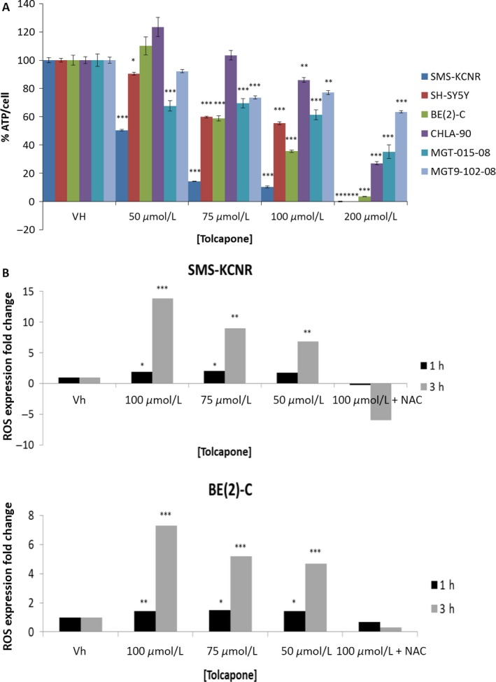 Tolcapone treatment corresponds to a dose‐dependent decrease in cellular metabolic activity and increase in reactive oxygen species (ROS) in NB cell lines. (A) Cells were treated with Tolcapone (0–200 μmol/L) for 48 h. Cell Titer GLO was used to measure total cellular ATP and CyQuant was used to measure total cellular DNA ( n = 3, graph is representative of one replicate). Values are mean ± SD. (B) Cells were stained with 20 μmol/L DCFDA to measure ROS for 45 min and then treated with varying concentrations of Tolcapone (0–100 μmol/L) with or without NAC for either 1 or 3 h ( n = 3, graph is representative of one replicate). Values are mean ± SD (* P