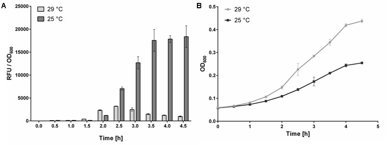 Effect of temperature on AHK4 signaling. Signal to bacterial density (RFU to OD 600 ) ratios, and bacterial densities, obtained following incubation (for indicated times) of E. coli KMI001-AHK4 at 25 and 29°C in M9-505 medium supplemented with 1 μM tZ. 200 μl portions of KMI001-AHK4 detection culture were dispensed into two 96-well plates with tZ. One was cultivated at 25°C, and the other at 29°C, for 5 h with shaking at 800 rpm in a <t>ThermoMixer</t> C (Eppendorf). Every 30 min. three 30 μl samples were taken from both sets of E. coli suspensions, their optical density was measured then 0.3 μl of 50 mM 4-MUGal was added and incubation continued in a 384-well plate at 37°C with shaking at 1,400 rpm for 30 min. Then the reaction was stopped by adding 9 μl of 1.2 M sodium carbonate and fluorescence was measured. (A) The RFU/OD 600 ratios clearly show that detection culture cultivated at 29°C was much less sensitive than otherwise identically cultivated culture at 25°C. (B) Growth curves of detection cultures follow the classical trend, but in contrast to expectations the higher densities of E. coli cultivated at 29°C are associated with substantially lower RFU/OD 600 ratios. Thus, the KMI001-AHK4 detection culture must be incubated with test compounds at a constant temperature to obtain reproducible responses. In both (A,B) , data shown are means ± SD ( n ≥ 3).