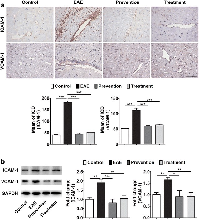 Effects of ImKTx88 on ICAM-1 and <t>VCAM-1</t> expression. a Representative immunohistochemistry of ICAM-1 and VCAM-1 expression in the cerebellar white matter of EAE-induced and ImKTx88 treated rats. The scale bar represents 100 µm. Staining was quantified by mean of the integrated optical density (IOD) (5 random images per section and n = 3). b A representative western blot of cerebellum homogenates and quantification analysis revealed that the levels of ICAM-1 and VCAM-1 were significantly increased in EAE-induced rats, and ImKTx88 could decrease the levels of ICAM-1 and VCAM-1 (n = 5–12). GAPDH was used as an internal loading control. Data represent the mean ± SEM, * P