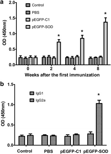 Toxoplasma -specific antibody levels in the sera of immunized BALB/c mice. The total IgG antibodies ( a ) in the collected serum samples of BALB/c mice immunized with pEGFP-SOD, pEGFP-C1, PBS and blank control on weeks 0, 2, 4, 8 were analyzed by ELISA. The levels of IgG1 and IgG2a ( b ) subtypes in the sera 28 days after the last immunization were determined by ELISA. The results are expressed as the means ± SD from three independent experiments . p