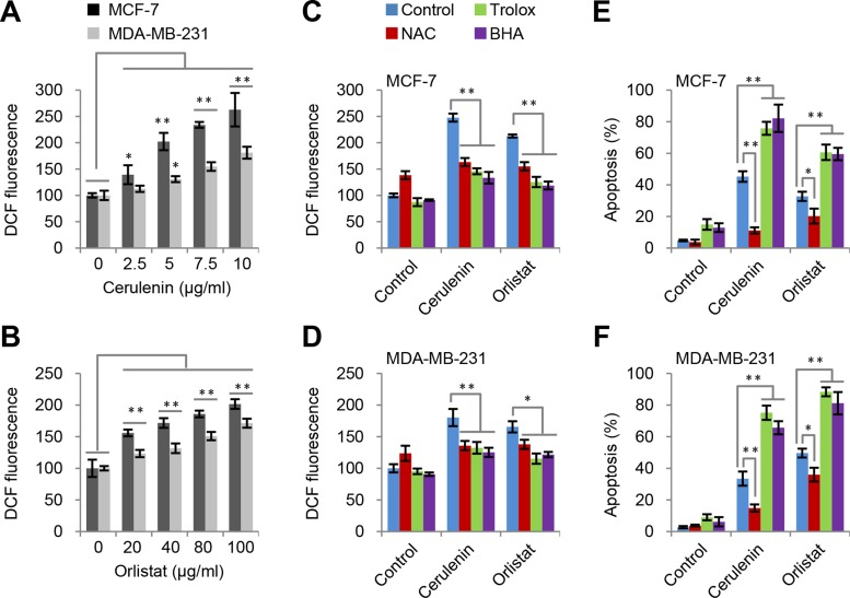 ROS is induced by FAS inhibition but not responsible for apoptosis ( A and B ) Cerulenin and orlistat induced ROS generation in MCF-7 and MDA-MB-231 cells. ROS levels were measured after cells were treated with FAS inhibitors as indicated for 2 h. ( C and D ) Effects of trolox, BHA and NAC on ROS generation in MCF7 and MDA-MB-231 cells induced by cerulenin and orlistat. ROS levels were measured after cells were treated with 10 μM of cerulenin or 100 μg/ml of orlistat in combination with 2 mM of trolox, 10 mM of NAC or 100 μM of BHA for 2 h. ( E and F ) Effects of trolox, BHA and NAC on apoptosis in MCF-7 and MDA-MB-231 cells induced by cerulenin and orlistat. Apoptosis was measured after cells were treated with 10 μM of cerulenin or 100 μg/ml of orlistat for 48 h. Error bar indicates ± SE ( n = 3).* p