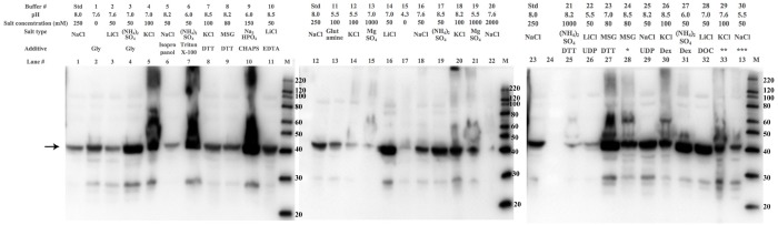 The effect of salts, pH and additives in the lysis buffer on the solubility of RGP1. Western blots against a cloning scar shows the varying amount of RGP1 in the soluble lysis fraction after lysing in different buffers. The arrow indicates the band corresponding to full-length RGP1 (42 kDa). Buffers 13 and 19–21, containing 1-2M salt, as well as the low-pH (4.3–5.5) buffers 11,12,15, 22 and 30 decrease the amount of soluble RGP1, while lower salt concentrations as well as several additives increase the amount of soluble RGP1 relative to the standard lysis buffer (std: 50 mM HEPES pH 8.0, 250 mM NaCl, 5 mM MgCl 2 ). MSG = monosodium glutamate, Dex = dextran. *Condition 24: 100 mM triethanolamine, 80 mM sodium glutamate, 0.02% n-octyl-β-D-glucoside, 10% glycerol, 5mM MgSO 4 , pH 8.5. **Condition 29: 100 mM Tris, 100 mM KCl, 0.1% deoxycholate, 25% glycerol, pH 7.6. ***Condition 30: 100 mM potassium acetate, 50 mM NaCl, 0.05% dextran sulfate, 0.1% CHAPS, pH 5.5.