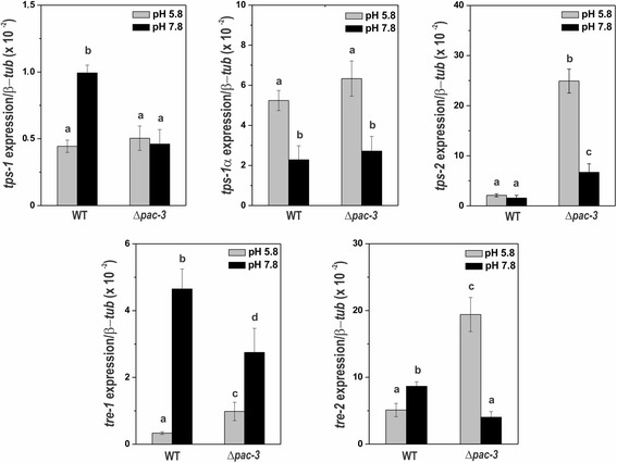 The expression of trehalose genes in the wild-type and Δ pac-3 strains at normal growth pH (5.8) and alkaline pH (7.8). Cells from the wild-type and Δ pac-3 strains were cultured at pH 5.8 for 24 h and shifted to pH 7.8 for 1 h. Mycelial samples were used to extract total RNA. Gene expression analysis was performed by RT-qPCR in the StepOnePlus™ Real-Time PCR system (Applied Biosystems) using the Power SYBR® Green and specific primers described in Additional file 1 : Table S1. The β- tub gene was used as the reference gene, and the wild-type pH 5.8 was used as the reference sample. At least four biological replicates were performed in triplicate, and the data were analyzed using the relative quantification standard curve method. Bars indicate the standard deviation from the biological experiments. a, b, c, d: Letters above the bars indicate statistical significance; different letters indicate significant differences between two samples and similar letters indicate no significant difference between two samples at the same or different pH (Student's t-test, P