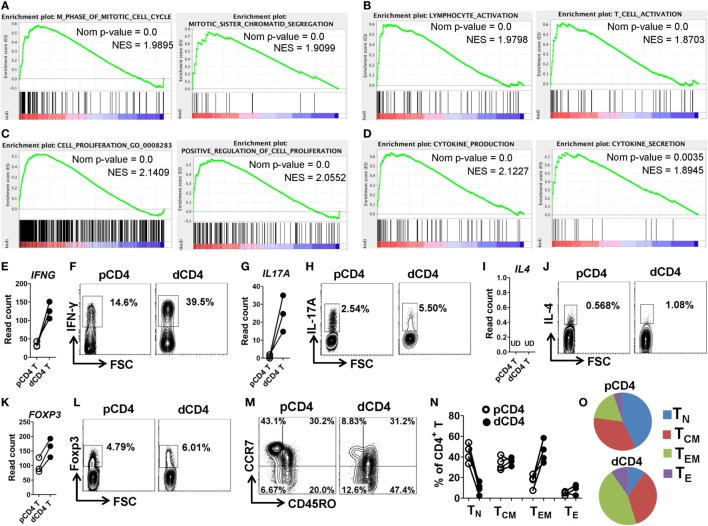 dCD4 T cells stay in M phase and show increased activation, proliferation, and cytokine production, as well as contain Th1, Th17, and Treg cell subsets and display an effector-memory phenotype. (A–D) GSEA plots of GO categories, including M phase of mitotic cell cycle, mitotic sister chromatin segregation (A) ; lymphocyte activation, T cell activation (B) ; cell proliferation, positive regulation of cell proliferation (C) ; and cytokine production and cytokine secretion (D) . (E,G,I,L) Comparison of the gene expression (measured as the read count) of IFNG, IL17A, IL4 , and FOXP3 between in paired pCD4 and dCD4 T cells at rest. Each symbol reflects a sample and each line reflects the samples from an individual ( n = 3 per group). (F,H,J,K) Comparison of the expression of IFN-γ, IL-17A, IL-4, and Foxp3 between paired pCD4 and dCD4 T cells as determined by intracellular staining upon stimulation with phorbol-12-myristate-13-acetate and ionomycin in the presence of brefeldin and monensin. Similar results were obtained from four individuals at the first trimester of normal pregnancy. (M–O) Representative flow cytometric plots (M) , bar graphs (N) and pie charts (O) displaying the proportions of native (T N , CD45RO − CCR7 + ), effector (T E , CD45RO − CCR7 − ), T CM (CD45RO + CCR7 + ), and T EM (CD45RO + CCR7 − ) cells in paired pCD4 and dCD4 T cells. Each symbol reflects a sample and each line reflects the samples from the same person ( n = 4 per group). pCD4 T, peripheral blood CD4 + T; dCD4 T, decidual CD4 + T; GO, Gene Ontology; GSEA, gene set enrichment analysis; Nom, Nominal; NES, Normalized Enrichment Score; UD, undetected.