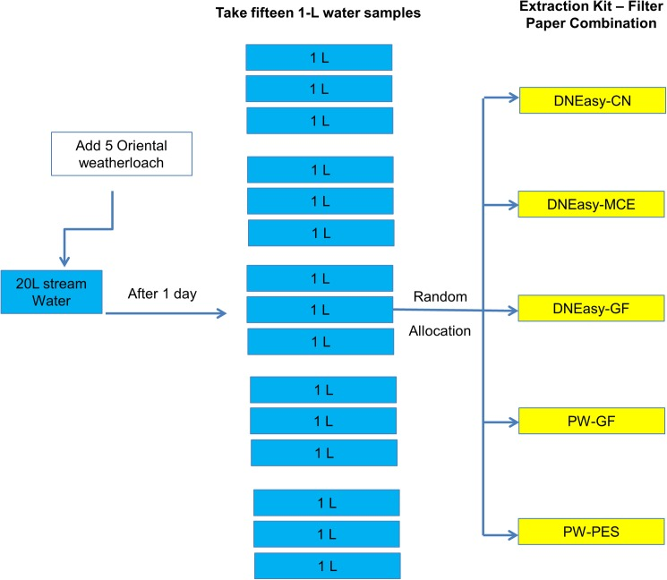 Experimental design for Experiment 2B investigating DNA yields in five different DNA extraction kit-filter paper combination from stream water. N refers to number of technical replicates. CN, MCE, PES, PCTE and GF refer to the types of filter papers whereas DNeasy and PowerWater (PW) refer to the two DNA extraction kits used in the experiment.