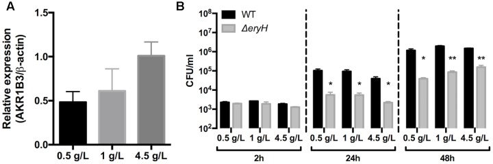 The expression of Aldose reductase gene Akr1b3 in RAW 264.7 macrophages depends on glucose concentration. (A) Expression of gene Akr1b3 measured by qRTPCR in macrophages cultured with 0.5, 1, and 4.5 g/L of glucose. (B) Multiplication of B. abortus 2308 WT and Δ eryH in macrophages cultured with 0.5, 1, and 4.5 g/L of glucose. All experiments were performed in biological and technical duplicates ( ∗ p