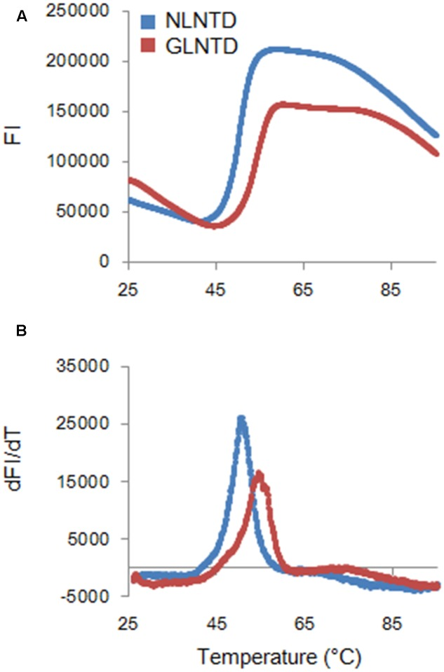 """Thermal stability of CA NTD proteins derived from HIV-1 NL4-3, and HIV-2 GL-AN. The thermal stability of NLCA and GLCA NTD proteins in the presence of 250 mM NaCl was determined by DSF as described in the Section """"Materials and Methods"""". SYPRO orange fluorescence intensity (FI) at varying temperatures (upper panel) and derivative melt curves calculated by differences in FI at each temperature (lower panel) are shown. Peak temperatures in the curves (dFI/dT) were considered as Tm."""