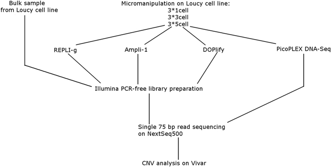 Experimental design. Samples consisting of 1, 3 or 5 cells were collected from the Loucy cell line using micromanipulation for each WGA method in triplicate. Cells were amplified with either Ampli-1, REPLI-g or DOPlify, followed by PCR-free Illumina library preparation and sequencing. A fourth method, Picoseq, performs WGA and library preparation simultaneously, without the need for a separate library preparation. A bulk DNA sample was extracted from 5 * 10 6 Loucy cells using a column-based extraction method from Qiagen, also followed by PCR-free Illumina library preparation and sequencing.